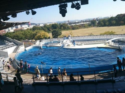 イルカのショー.jpg