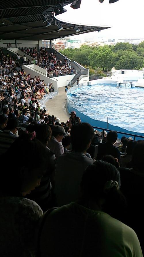 イルカ1.jpg