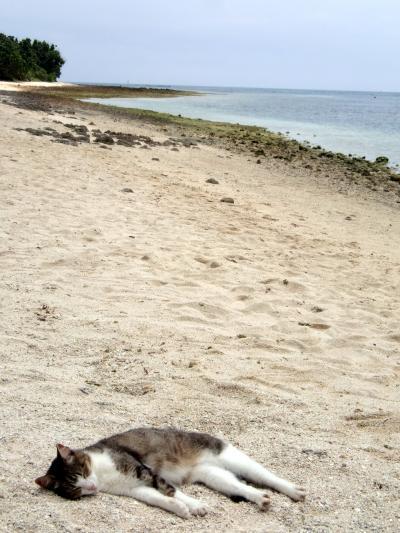 カイジ浜猫2013.jpg