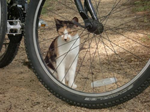 タイヤ越し猫.jpg