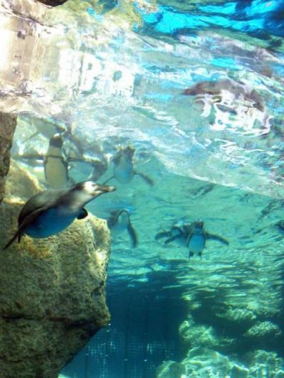 ペンギンアップ201605.jpg
