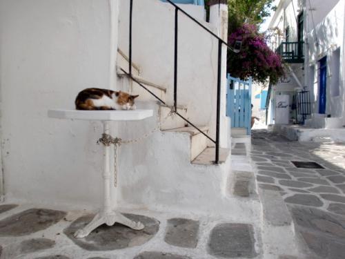 ミコノス猫.jpg