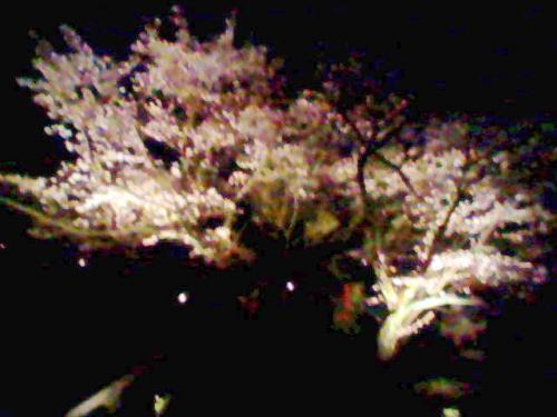 ライトアップ桜.jpg