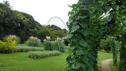 万博公園夏の花八景.jpg