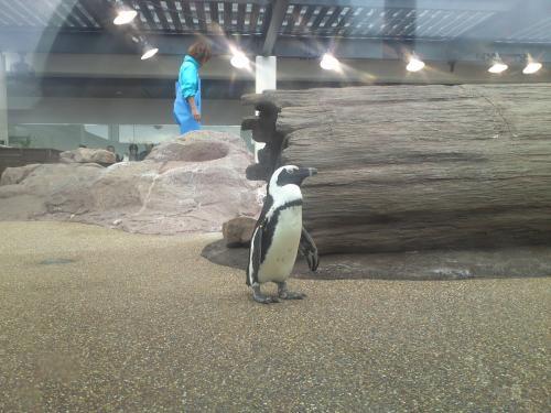 京都ペンギン.jpg
