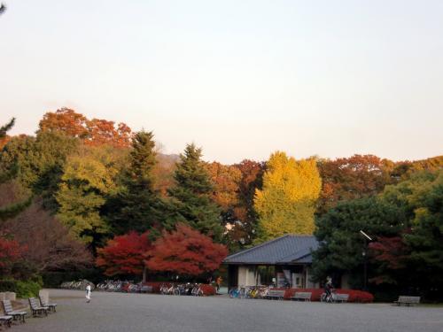 京都御所紅葉.jpg