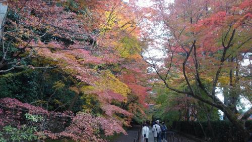 光明寺(紅葉トンネル).jpg