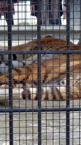 動物園33.jpg