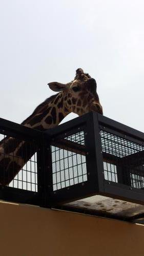 動物園11.jpg