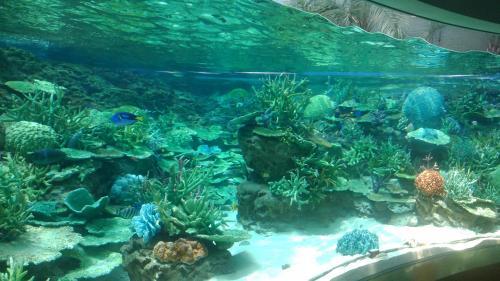 名古屋港水族館(サンゴ、フェイク).jpg