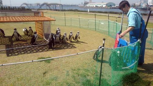 名古屋港水族館(ペンギン).jpg