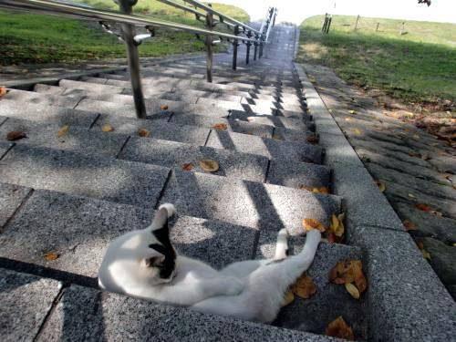 大山崎猫1309.jpg