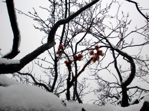 天満宮2014雪3.jpg