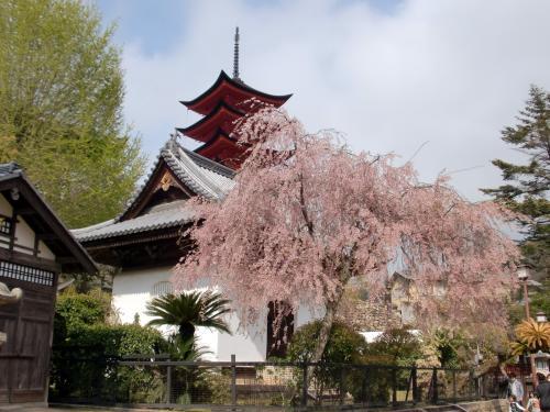 宮島桜、五重塔.jpg