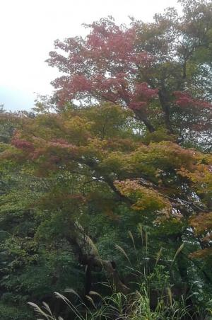 嵐山常寂光寺_convert_20171027194955.jpg