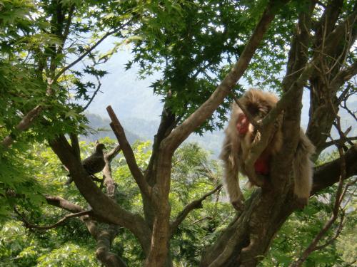 木の上の猿2014.jpg