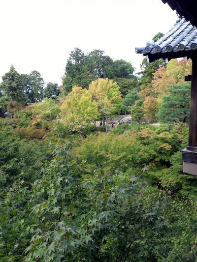 東福寺紅葉はじまり.jpg