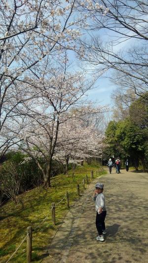 梅小路公園桜3.jpg