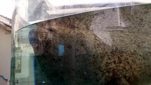 水族館201702.jpg