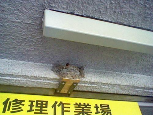 燕の巣.jpg