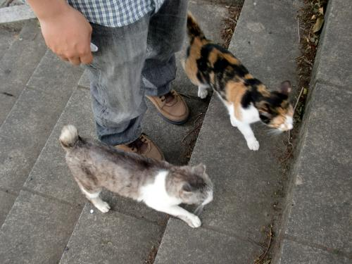 猫使い.jpg
