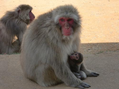 猿の親子201405.jpg