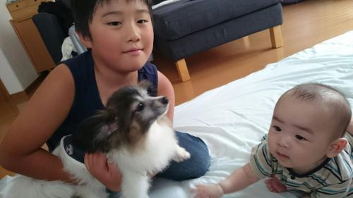 甥っ子と息子と犬と.jpg