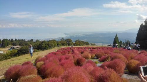 箱館山コキアと琵琶湖.jpg