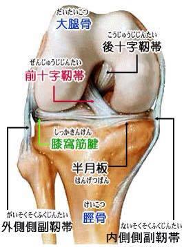 膝関節2.jpg