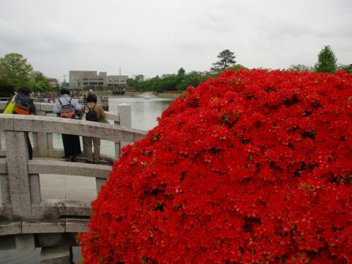 長岡天満宮の池.jpg