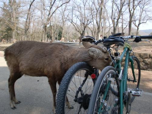 鹿と自転車.jpg