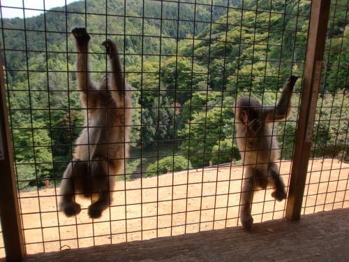 2匹小猿2014.jpg