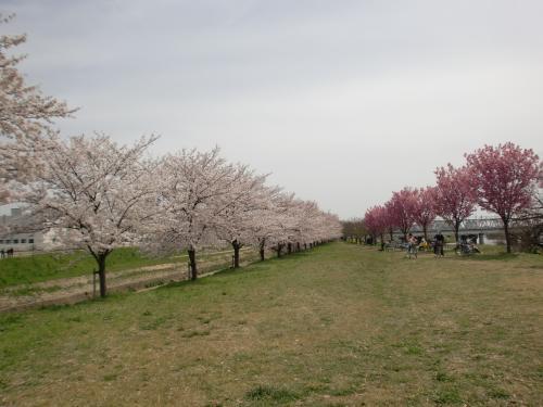H25春緑地公園.jpg