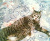 猫写真2.jpg