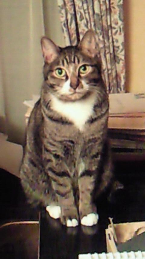 猫写真1.jpg